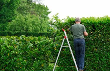Look after your hedge