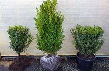 What's the difference between Bare-Root, Root balled and Container Grown Plants