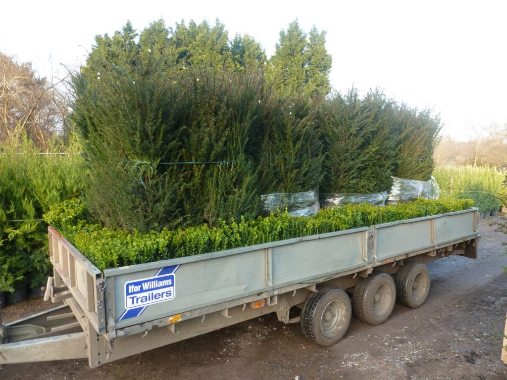 hedge delivery