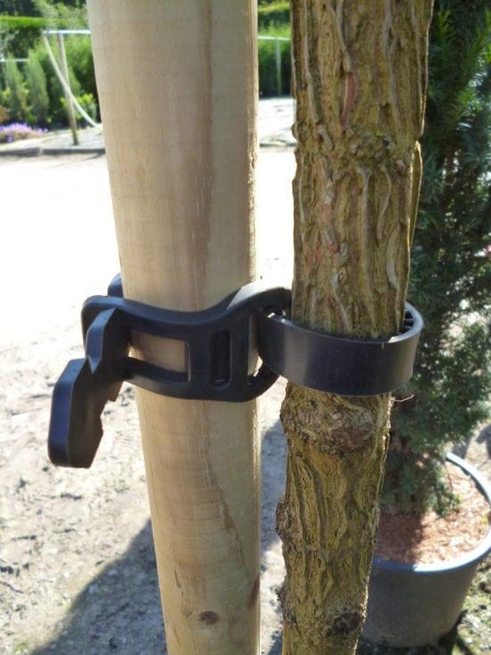 Tree Ties