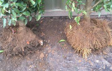 Root trim